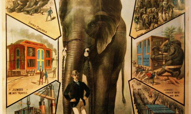 Jumbo, un elefante in America