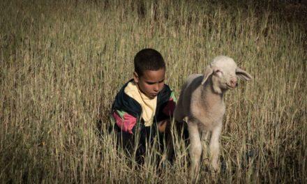 Crescere scavalcando le pecore